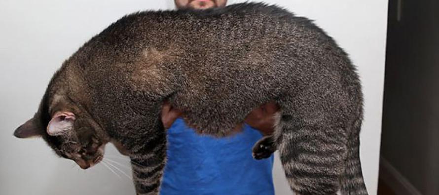 90ce483c8c4d Οι μεγαλύτερες γάτες του κόσμου είναι αυτές..picks - Giroapola ...